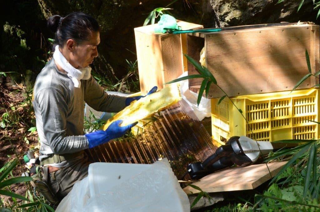 バイクのスタントマンから、日本蜜蜂専門の蜜蜂農家へ。直感を信じて切り開く新たなライフスタイル。