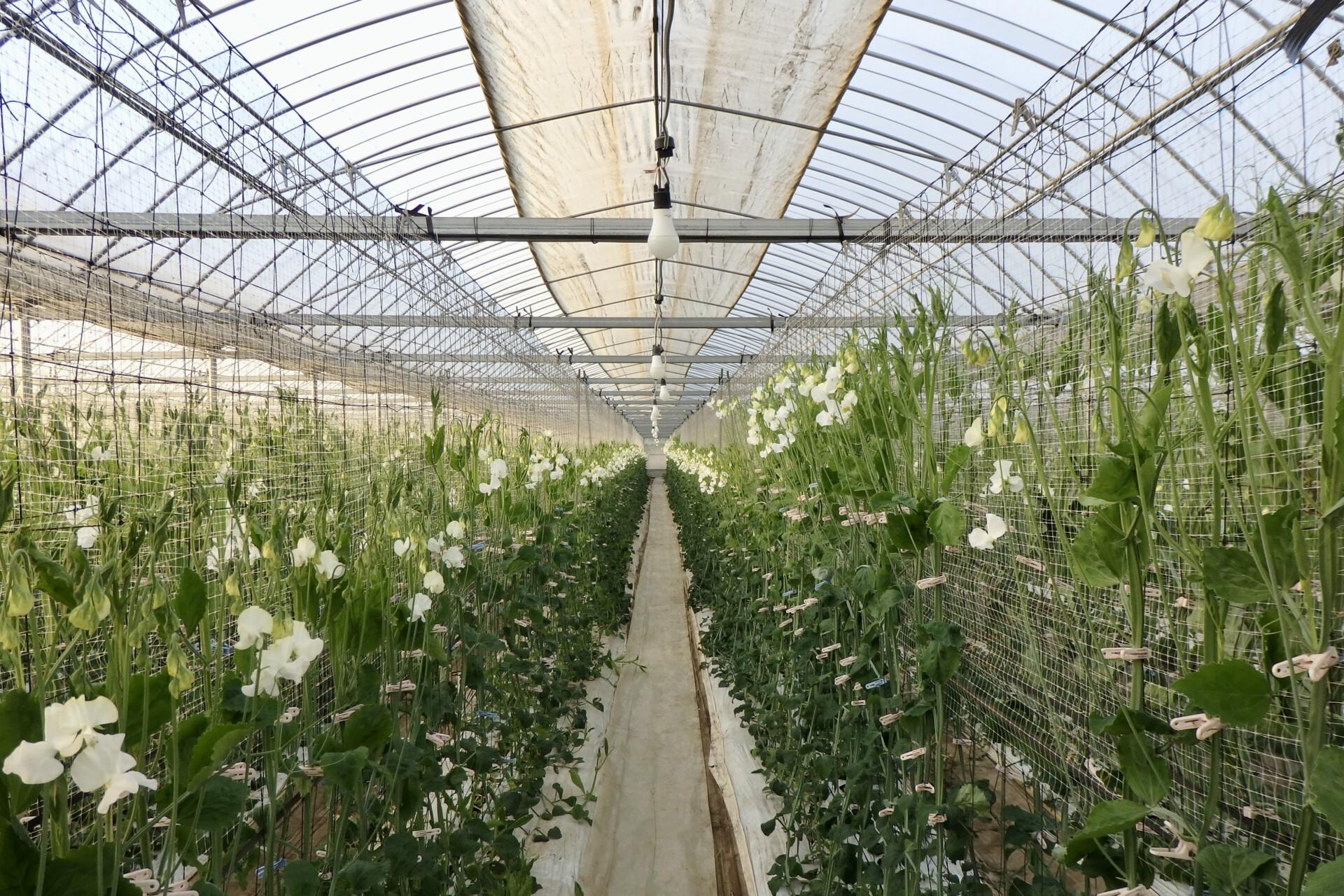会社員から農家へ。夫婦二人三脚で農業と地域の可能性をさぐる。