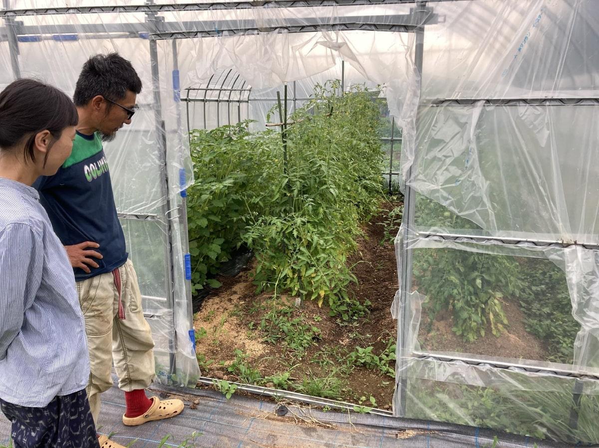 ハウスで無農薬野菜の栽培