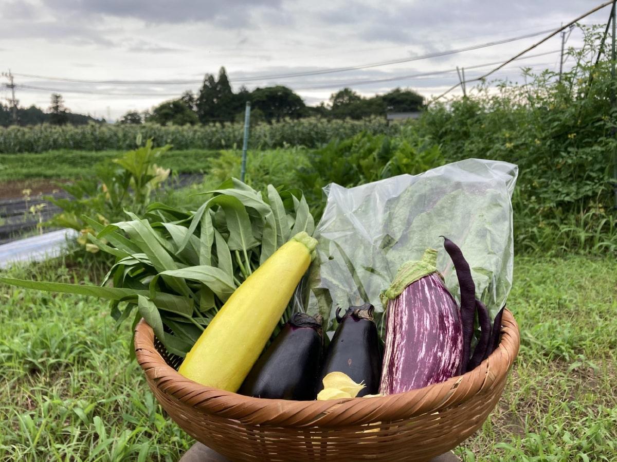 無農薬野菜のの写真